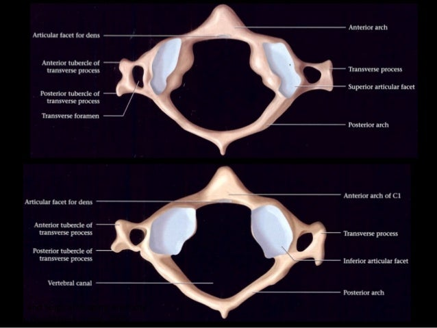Head And Cervical Spine Imaging