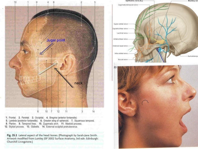 Head And Face