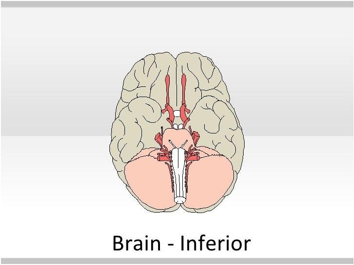 Human anatomy powerpoint