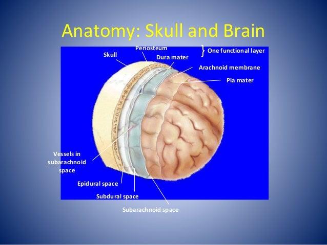 Anatomy: Skull and Brain Skull Periosteum Dura mater } One functional layer Arachnoid membrane Pia mater Vessels in subara...