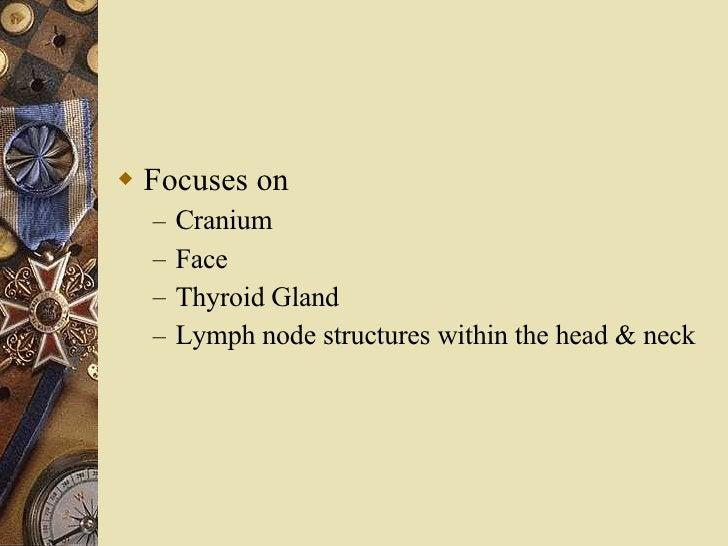 <ul><li>Focuses on  </li></ul><ul><ul><li>Cranium </li></ul></ul><ul><ul><li>Face </li></ul></ul><ul><ul><li>Thyroid Gland...