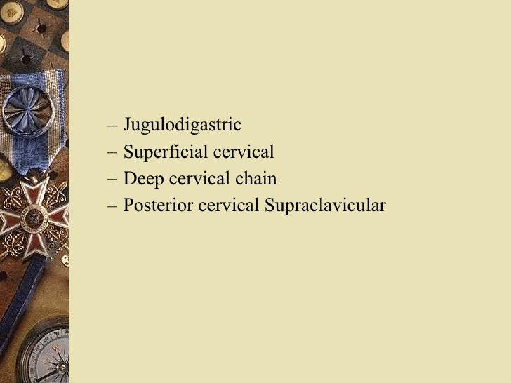 <ul><ul><li>Jugulodigastric </li></ul></ul><ul><ul><li>Superficial cervical </li></ul></ul><ul><ul><li>Deep cervical chain...