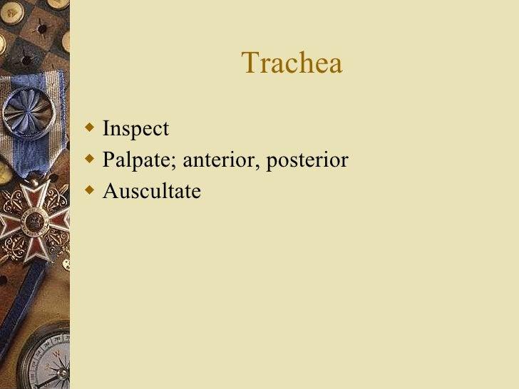 Trachea <ul><li>Inspect </li></ul><ul><li>Palpate; anterior, posterior </li></ul><ul><li>Auscultate </li></ul>