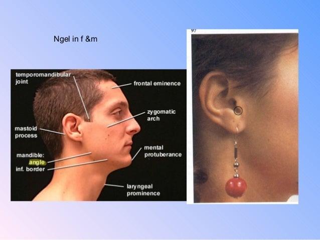 Head Surface Anatomy