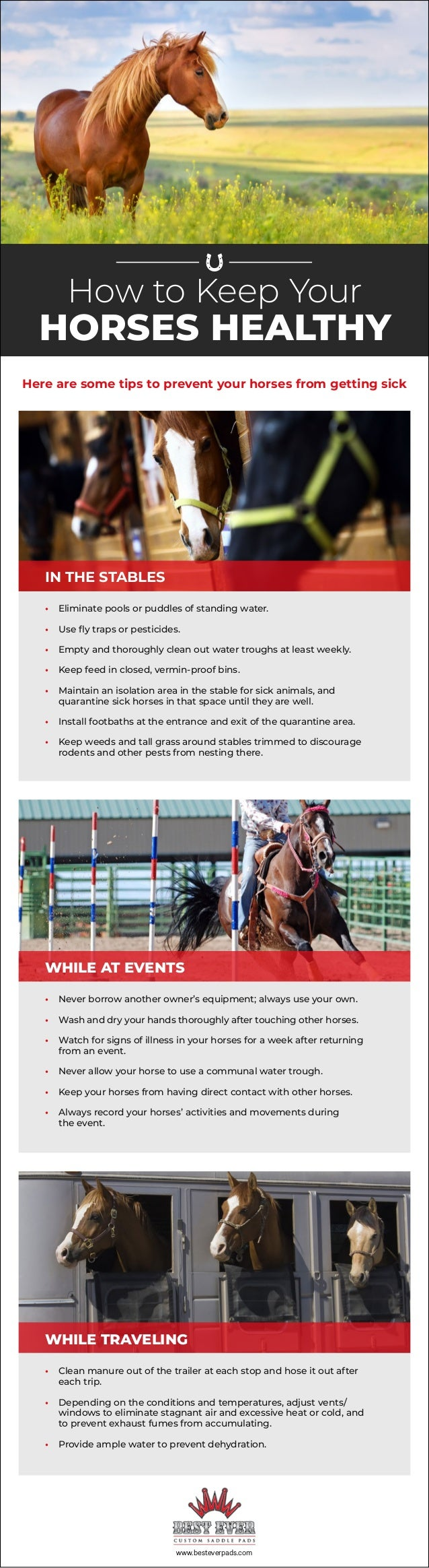 www.besteverpads.com How to Keep Your HORSES HEALTHY IN THE STABLES • Eliminate pools or puddles of standing water. • Use ...