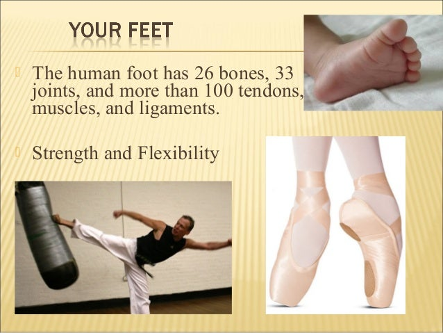 Image result for foot 33 joints