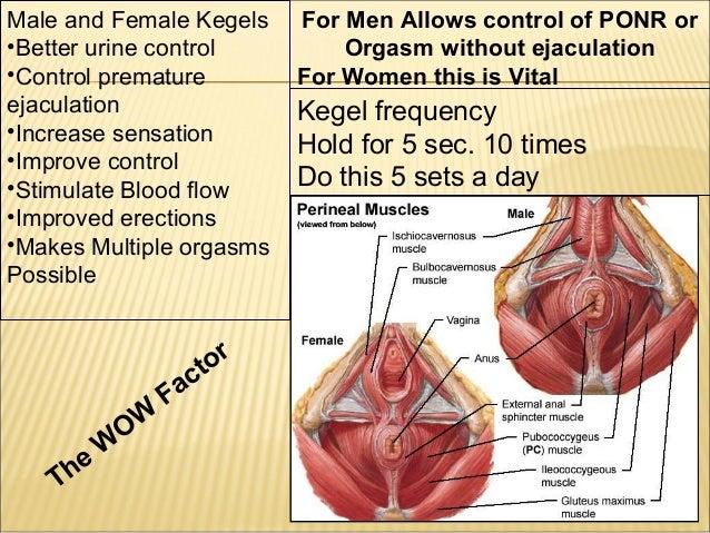 Average vaginal penetration