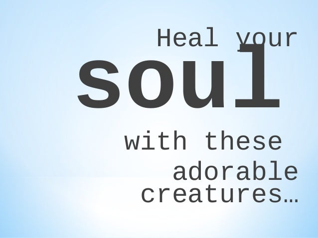 Heal your  soul  with these adorable creatures…