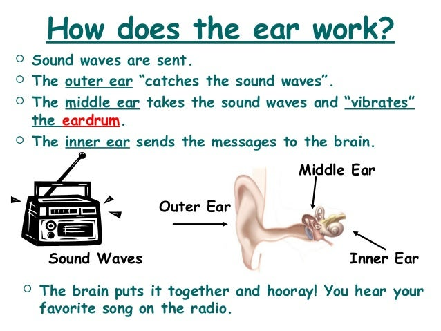 how does sound travel through the ear to the brain