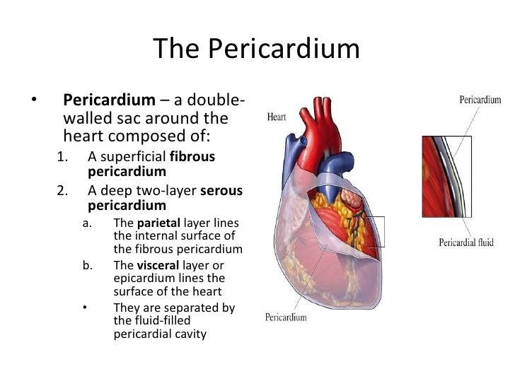 heart-7-728.jpg?cb=1266615422
