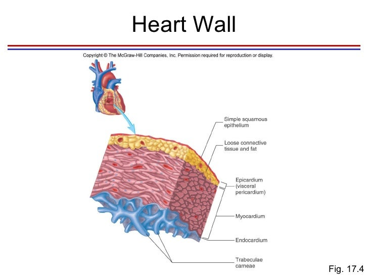 Heart heart wall fig ccuart Image collections