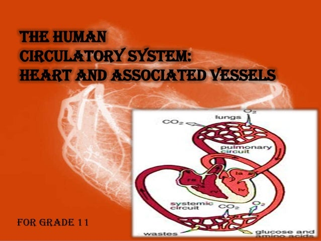 THE HUMAN CIRCULATORY SYSTEM: HEART AND ASSOCIATED VESSELS  For Grade 11