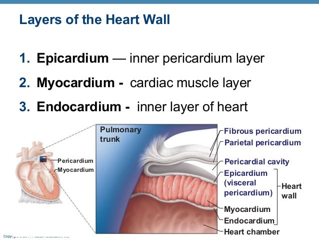 Epithelium 35705 besides Shortness Of Breath further Pericardial as well No Slide Title 9 besides 5080241. on serous membrane of heart