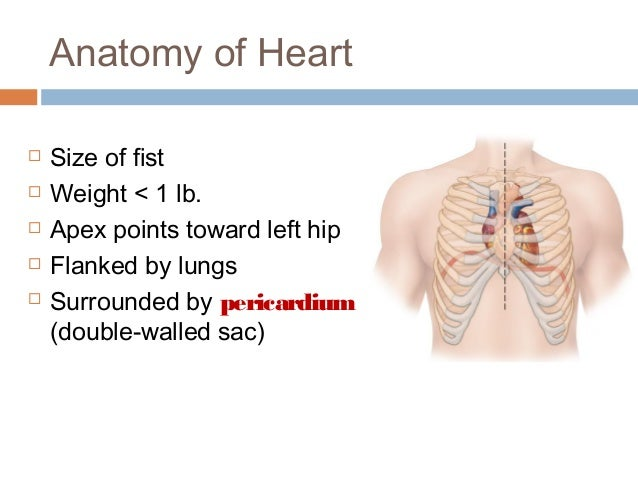 anatomy notes on the hip More notes: tilting your hips on the plane of turnout is not the same as lifting your   you have to understand your hip anatomy in order to really.