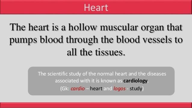 Anatomy of Heart Slide 2