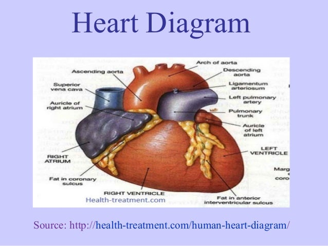 Heart diagram 4 638gcb1385414638 heart diagram ccuart Choice Image