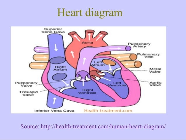 Eniglish Labeled Heart Diagram Wiring Diagram Database