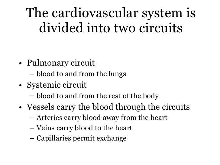 Heart excitation Slide 3