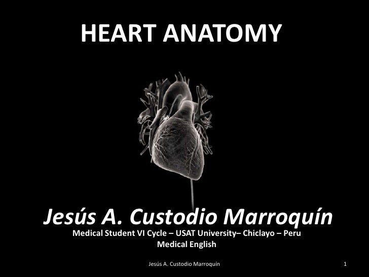 HEART ANATOMY<br />Jesús A. Custodio Marroquín<br />By:<br />Dr Mohammed Faez<br />Medical Student VI Cycle – USAT Univers...