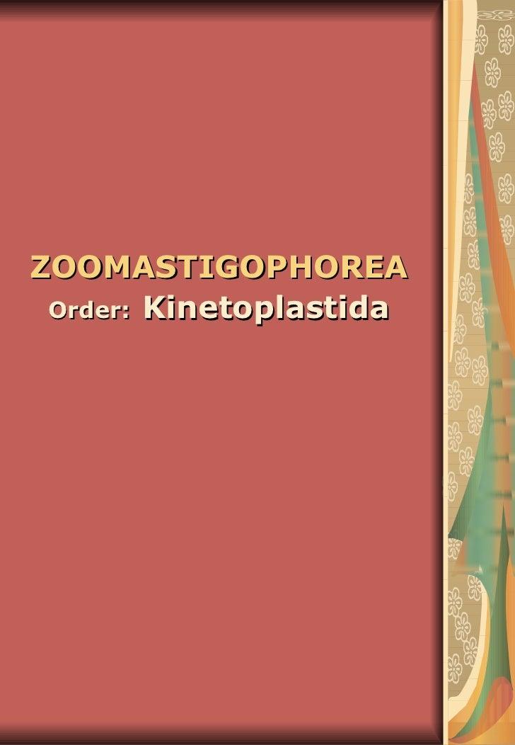 ZOOMASTIGOPHOREA   Order:   Kinetoplastida