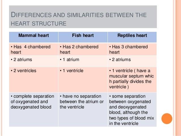 heart of fish reptiles and human