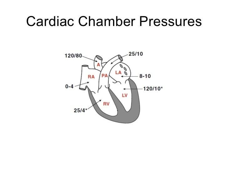 heart physiology 20 728