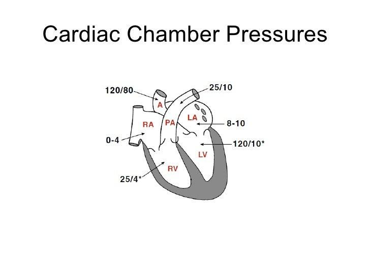 Heart Physiology