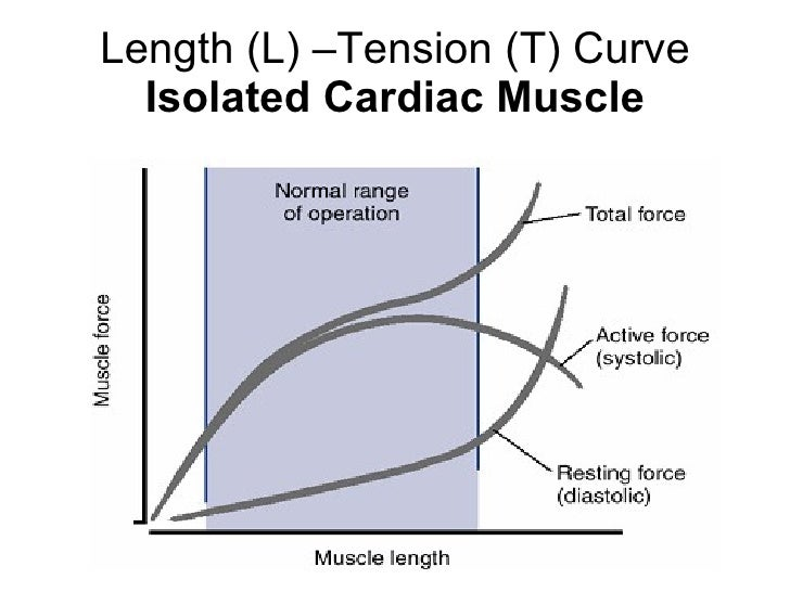 force length relationship cardiac muscle function