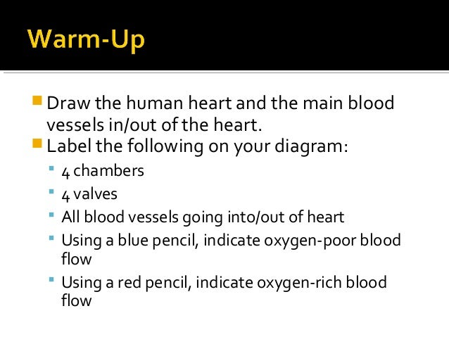 Anatomy physiology lecture notes heart physiology draw the human heart and the main blood vessels inout of the heart ccuart Image collections