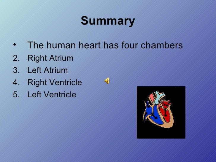 Summary <ul><li>The human heart has four chambers </li></ul><ul><li>Right Atrium </li></ul><ul><li>Left Atrium </li></ul><...