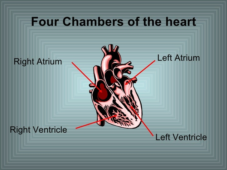 Four Chambers of the heart Right Atrium  Left Atrium  Right Ventricle  Left Ventricle