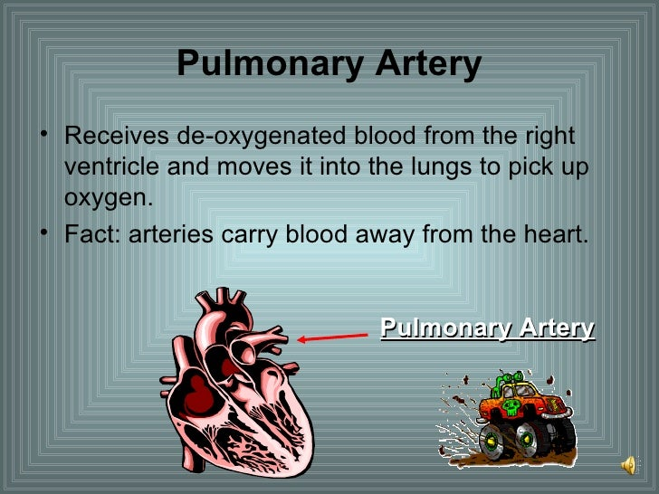 Pulmonary Artery <ul><li>Receives de-oxygenated blood from the right ventricle and moves it into the lungs to pick up oxyg...