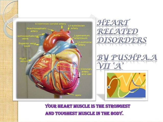 Your heart muscle is the strongest and toughest muscle in the body.