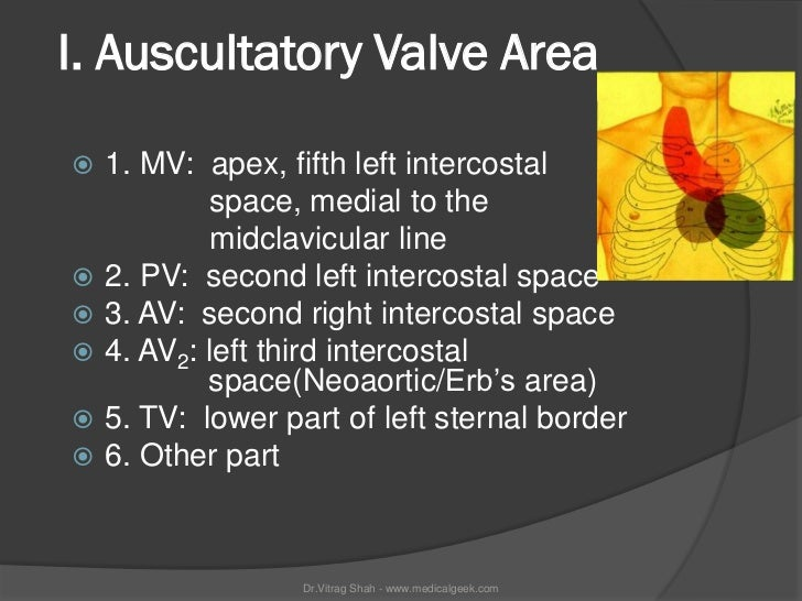 I. Auscultatory Valve Area   1. MV: apex, fifth left intercostal            space, medial to the            midclavicular...