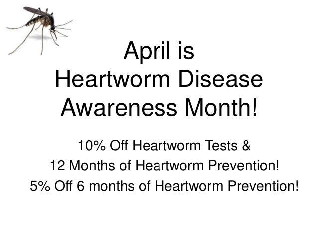 April is Heartworm Disease Awareness Month! 10% Off Heartworm Tests & 12 Months of Heartworm Prevention! 5% Off 6 months o...