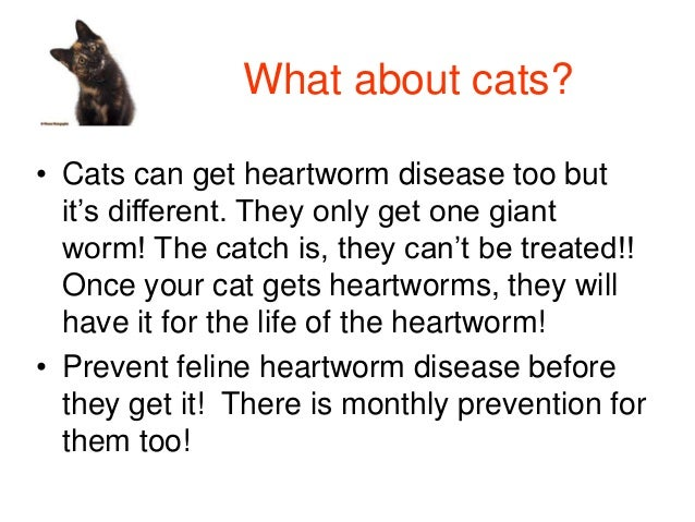 Where Can I Get Heartworm Pills For My Dog