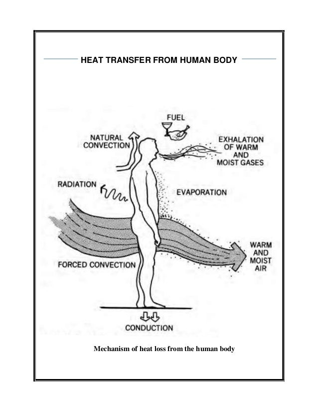 Human body heat transfer