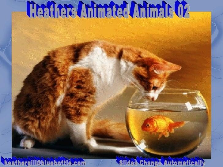 Heathers Animated Animals 02 [email_address] Slides Change Automatically