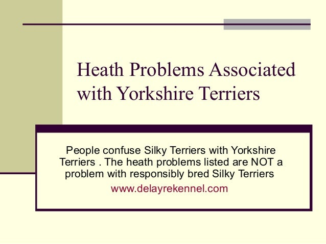 Heath Problems Associated   with Yorkshire Terriers People confuse Silky Terriers with YorkshireTerriers . The heath probl...