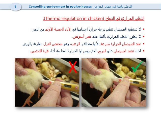 4- Heating in poultry houses  تدفئة حظائر الدواجن Slide 2