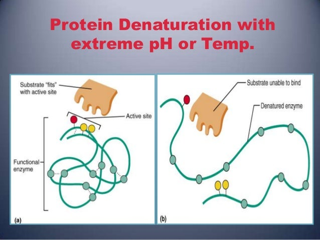 protein denaturation with extreme ph or temp