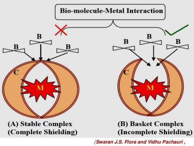biochemical pathways of heavy metal poisoning Exposure to heavy metal tungsten increases chances of stroke home and disruption of biochemical pathways and therefore the heavy metal poisoning of.