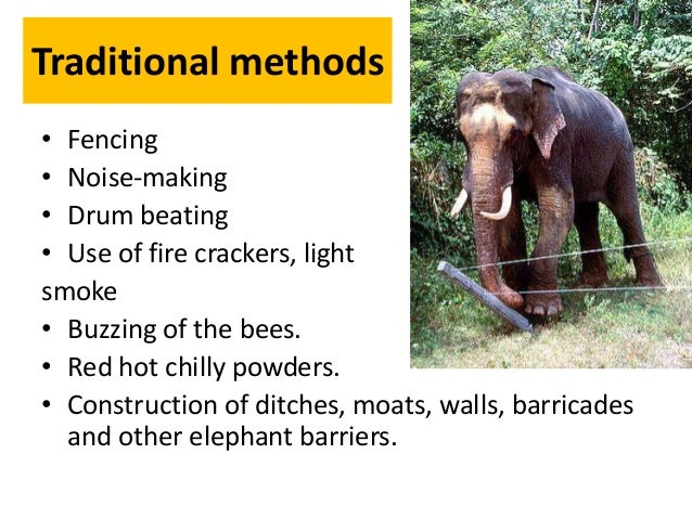 Strategies adopted to mitigate Human–Elephant Conflict (HEC