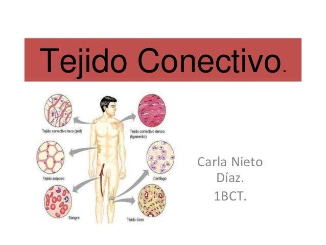 Tejido Conectivo. Carla Nieto Díaz. 1BCT.