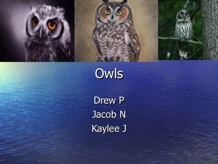 OwlsDrew PJacob NKaylee J