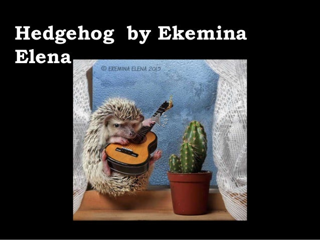 Hedgehog by Ekemina Elena