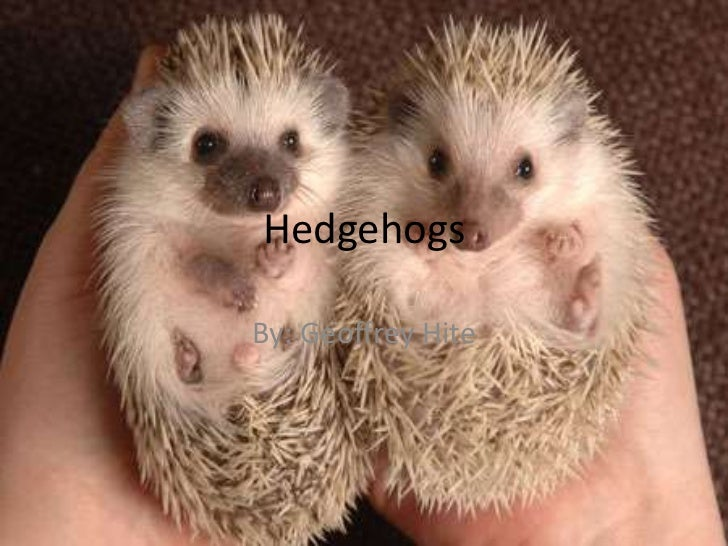 Hedgehogs<br />By: Geoffrey Hite<br />