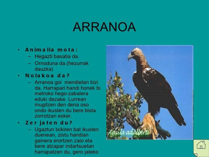 ARRANOA <ul><li>Animalia mota: </li></ul><ul><ul><li>Hegazti basatia da. </li></ul></ul><ul><ul><li>Ornoduna da.(hezurrak ...