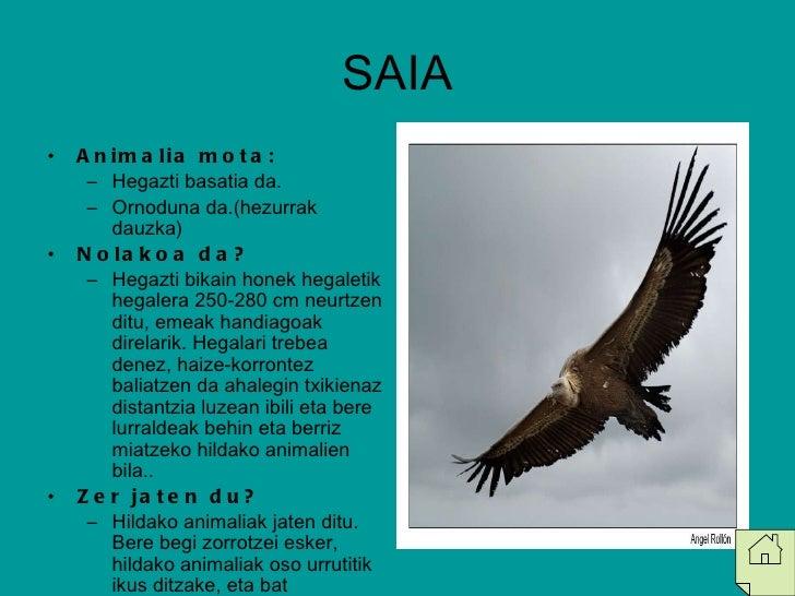 SAIA <ul><li>Animalia mota: </li></ul><ul><ul><li>Hegazti basatia da. </li></ul></ul><ul><ul><li>Ornoduna da.(hezurrak dau...