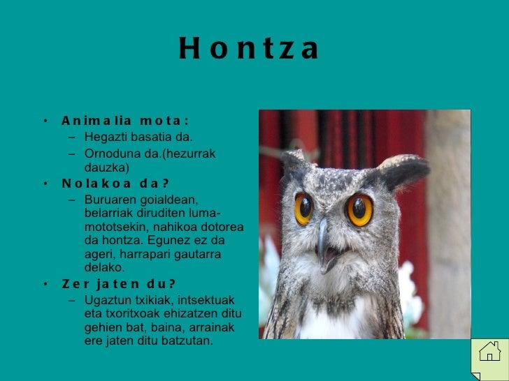 Hontza <ul><li>Animalia mota: </li></ul><ul><ul><li>Hegazti basatia da. </li></ul></ul><ul><ul><li>Ornoduna da.(hezurrak d...